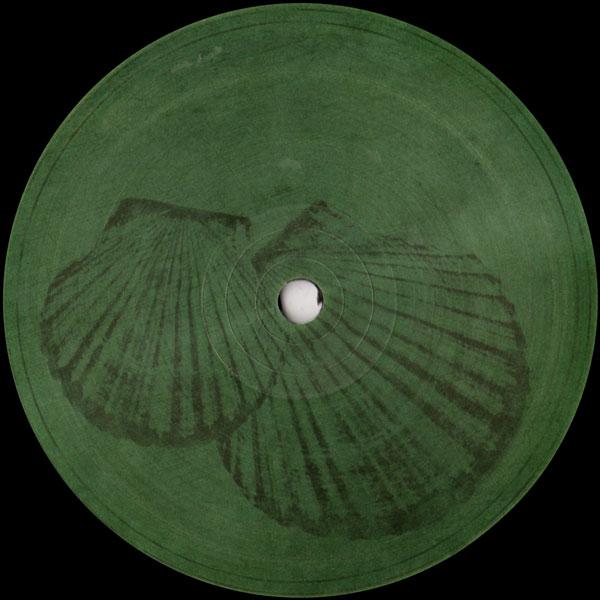 roberto-pecten-gibbus-fossil-archive-cover