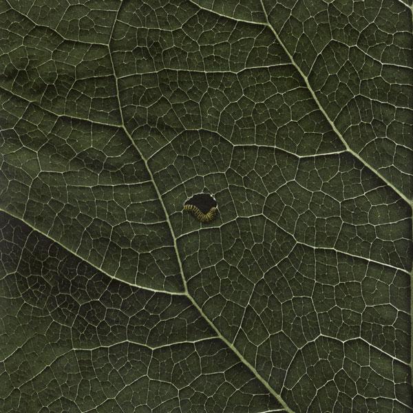 suolo-mulenv008-mulen-cover