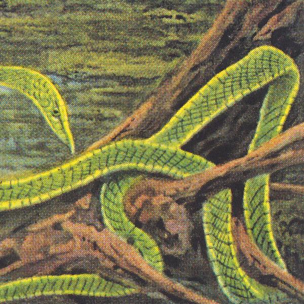 rainforest-spiritual-enslavem-green-graves-lp-hospital-productions-cover