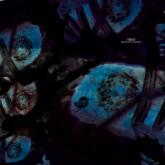 reboot-beautiful-parasite-cesar-mervei-cadenza-cover
